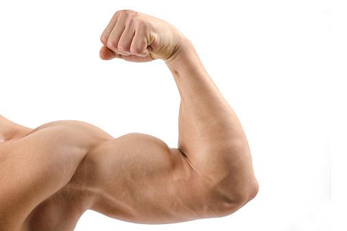 上腕二頭筋 筋肉